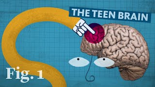 Why the teenage brain has an evolutionary advantage thumbnail