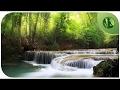 Sons Relaxantes da Natureza: Música Zen para Meditação, Massagem e Yoga 1 HORA