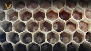 Обучающее видео по пчеловодству