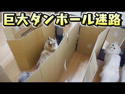 部屋一面に猫のダンボール迷路作ってみた!