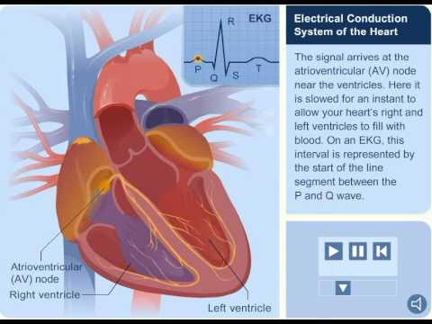 Hearts electrical system youtube hearts electrical system ccuart Choice Image