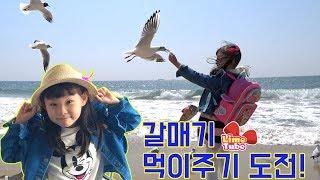 해운대 해수욕장에서 갈매기 먹이주기 도전! 부산여행 1편 파라다이스호텔부산 Busan trip HAEUNDAE!  LimeTube & Toy 라임튜브
