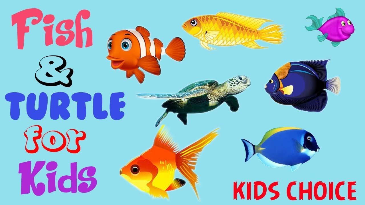Fish aquarium in kurla - Kids Fish Videos Fish And Turtle Video Amazing Way To Catch Fish By Child In Aquarium