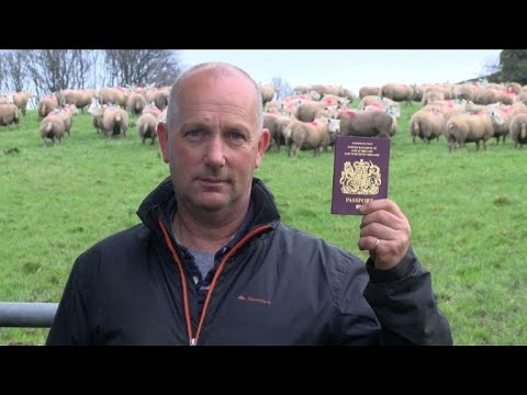 'Voices of Brexit' - the British sheep farmer