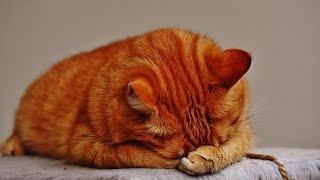Всё о кошках и котах .Интерактивное видео(Ролик- приглашение на канал