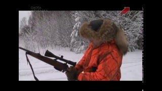 Охота на лося Кировская область видео