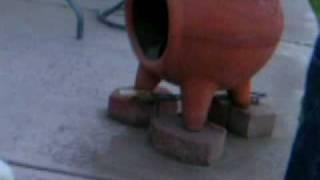 Pheobie the teenage dog episode 1 thumbnail