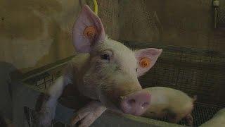 Réinventer l'alimentation animale avec des déchets alimentaires - futuris