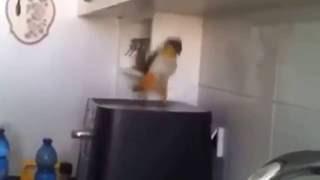Что может быть лучше попугая, танцующего на кофемашине(, 2016-06-10T18:52:48.000Z)