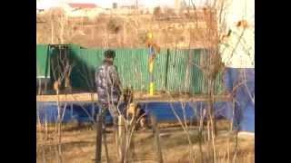 Обучение служебных собак в ГУФСИН по Иркутской области