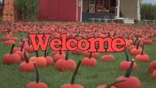 Pumpkin picking long island - The only farm you'll enjoy the Long Island pumpkin picking