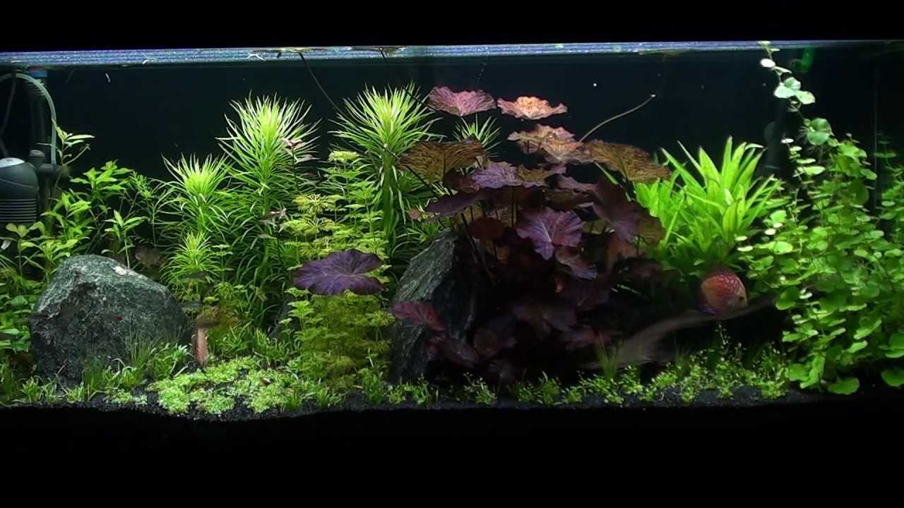360 liter planted discus aquarium 17 4 2012 youtube. Black Bedroom Furniture Sets. Home Design Ideas