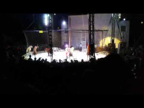 Oriental Circus Taman Safari in Balikpapan
