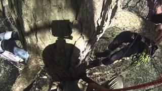 Eastern Hemlock research while tree climbing.