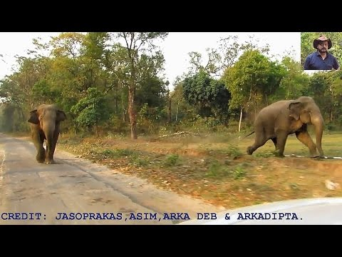 Longest Elephant Chasing Video.