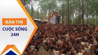 Chưa bán hết lợn, lại lo giải cứu gà | VTC1