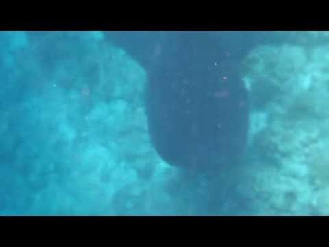 whale shark maldives 19.09.16