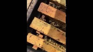 Пчелы в мае! пакет или пчелосемья что выгоднее??