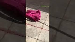 بالفيديو.. العثور على ثعبان داخل حقيبة طالبة في مدرسة بعسير!