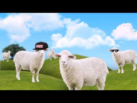 Beep Beep I'm A Sheep but with real sheep