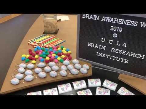 Ucla Neurology Research