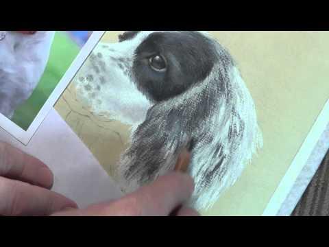 Spaniel Speed Painting in Pastel Pencils