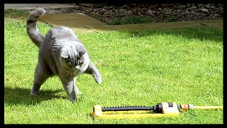 CAT PLAYING WITH WATER! | CHRIS & EVE