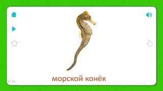 Морской Конёк - Карточки для детей - Морские Животные (Растения) Карточки Домана