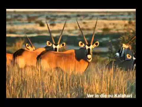 Ver in die ou Kalahari