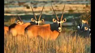Play Die Ou Kalahari