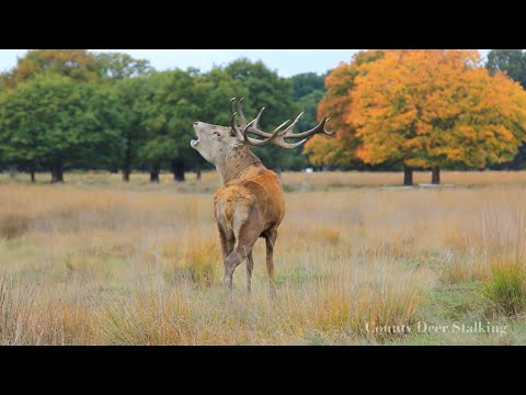 The Autumn Rut - Red Stag Stalking in Scotland