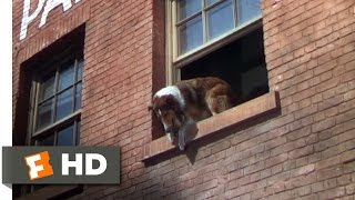 Lassie Come Home (9/10) Movie CLIP - A Daring Leap (1943) HD