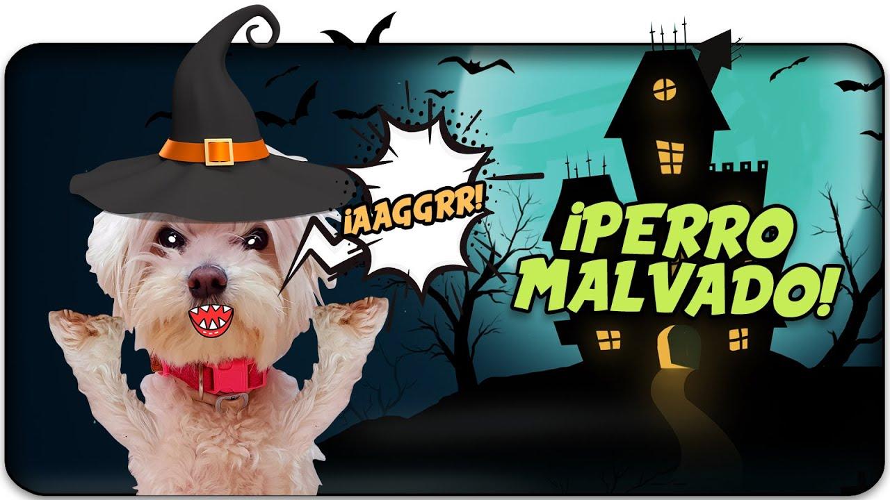 ¡Mi PERRO es MALVADO!😈 El HALLOWEEN de los PERROS!🎃 Anima Dogs