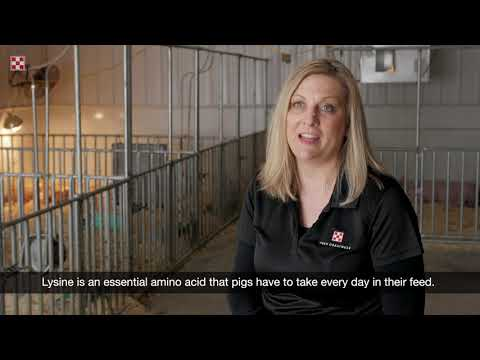 What To Feed Pigs: Complete Feeds | Purina Animal Nutrition
