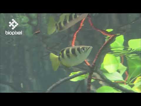 Oceanpedia   Habitat   Mangroves