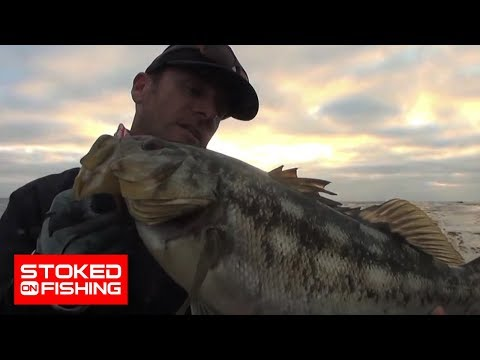 Calico Bass Fishing With Aaron Martens