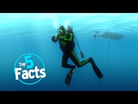 Thumbnail: Top 5 Scuba Diving Facts