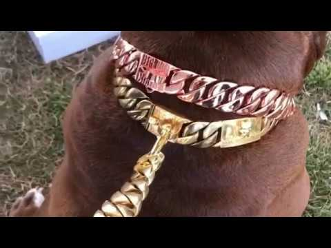 The Most expensive dog chain? Big dog chains HULK in luxury
