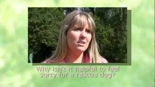 Dog Training And Rescue Dogs With Sharon Bolt From Good Dogs!
