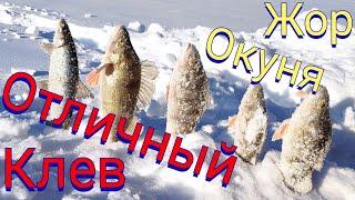 ловля окуня СУМАСШЕДШИЙ КЛЁВ