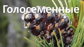 18. Голосеменные (6 класс) - биология, подготовка к ЕГЭ и ОГЭ 2018