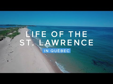 Life of the St. Lawrence in Québec | QuébecOriginal