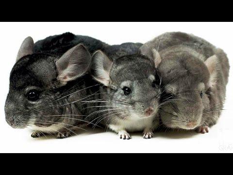 Фото животных, фотографии животных