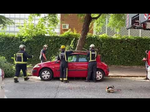 Bomberos del SEIS cordobés retirando una rama de un coche en la calle El Laurel