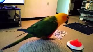 Cosmo Review Sonic Watermelon Slushy