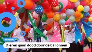 Ballonnen oplaten steeds vaker verboden