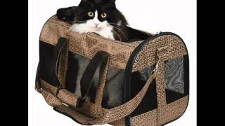 Сумки для кошек.wmv