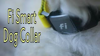 Fi Smart Dog Collar | Technology Upgrade
