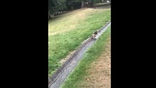 Happy Beagle Sliding Through Water Stream