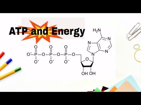 ATP Molecule |Adenosne Triphosphate|